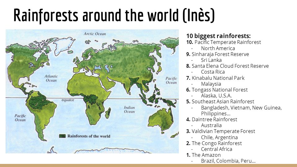 Impact of deforestation on the rainforest ecosystem ppt video 2 rainforests around the world sciox Gallery