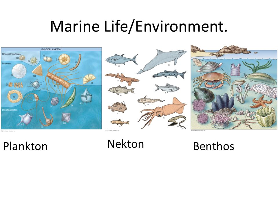 Marine Life and the Ma...