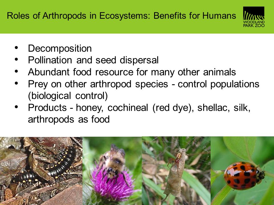an essay on ants and their role in the ecosystem Ant weaver is a social insect that has a clear task and function  ant's community  ecology has a tradition of detailed studies in small plots but the use of ants as.