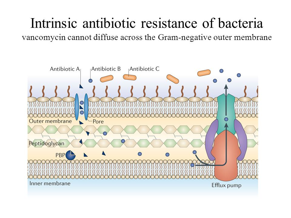 definition for antibiotic resistant bacteria Perspective from the new england journal of medicine — the future of antibiotics and resistance health comes in the form of antibiotic-resistant bacteria.