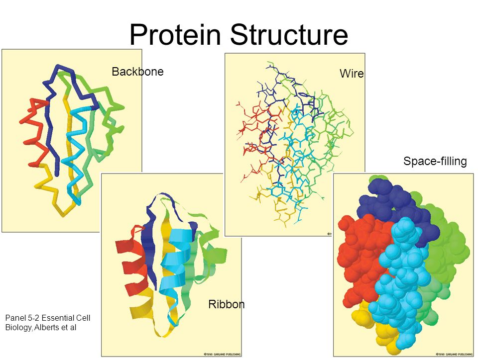 Protein+Structure+Backbone+Wire+Space filling+Ribbon molecular structures ppt download Basic Electrical Wiring Diagrams at honlapkeszites.co