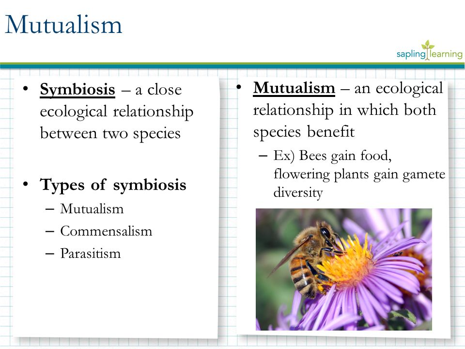 commensalism and mutualism Commensalism, amensalism & parasitism • overview • species interactions • positive, none, & negative effect – commensalisms – amensalism.