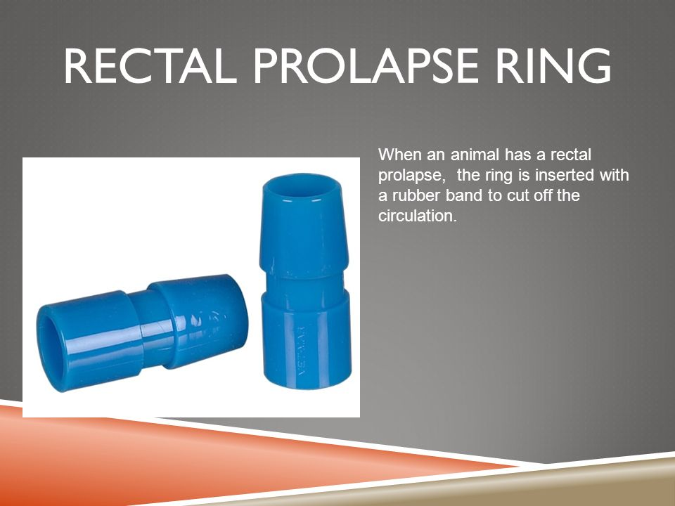 Rectal Prolapse Ring Swine Definition