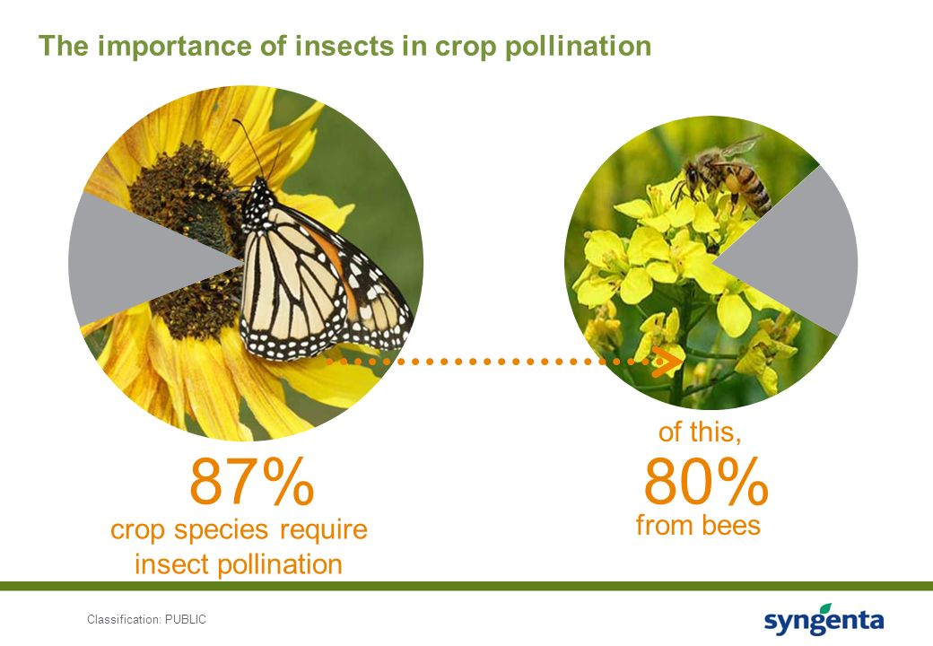Pollinator Stewardship: Protecting Bees with Safe and ...
