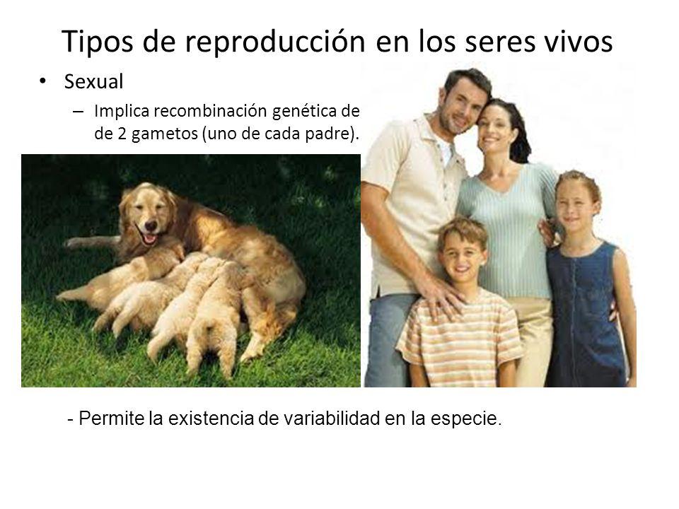 Tipos de reproducción en los seres vivos