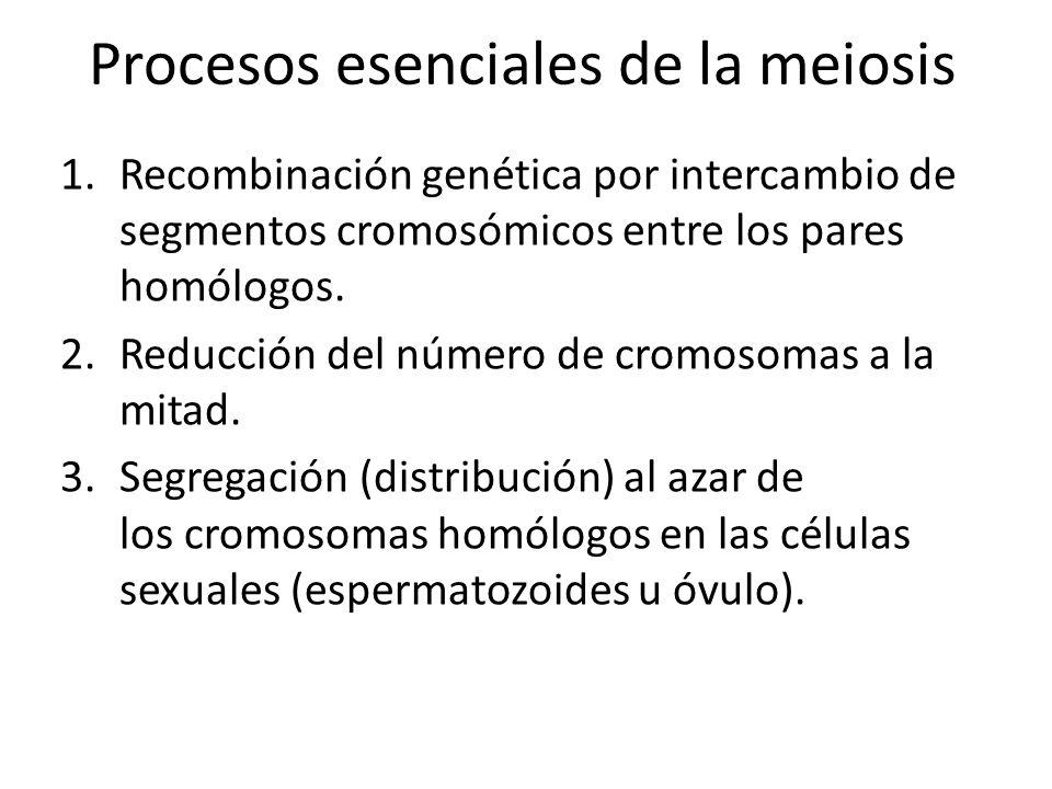 Procesos esenciales de la meiosis
