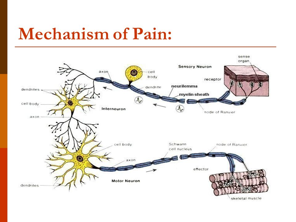 Jaw Pain additionally 10321518 as well Structure Of The Fornix Of The Brain besides  additionally Acupuncture. on nerve circuit
