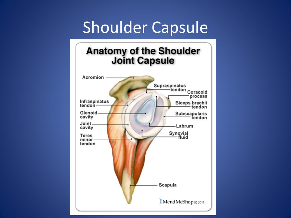 Nice Shoulder Anatomy Ppt Crest Human Anatomy Images