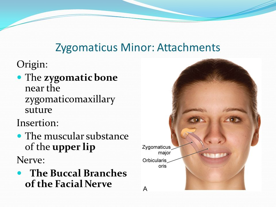 muscles of facial expression ppt download