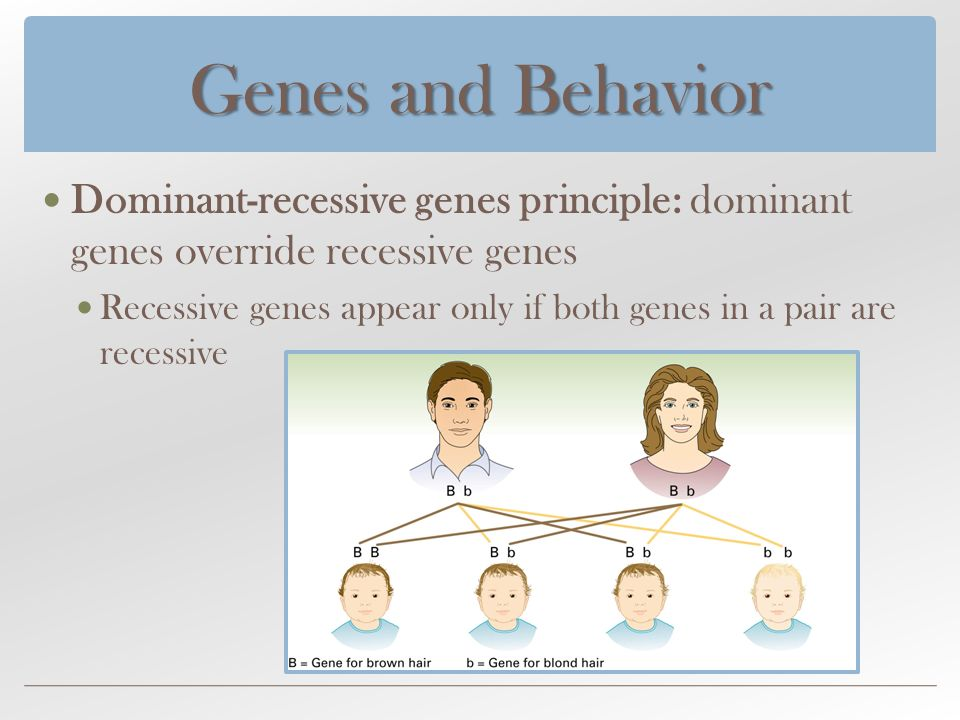 genetics twins visual phenotypes thesis Construction of facial phenotypes that correspond to naturally perceived facial   identical twins, such heritability values appear surprising low  prominent  fiducial points, by visual inspection of the average twinsuk face  methods  can be found in cates' phd dissertation entitled 'shape modeling and.