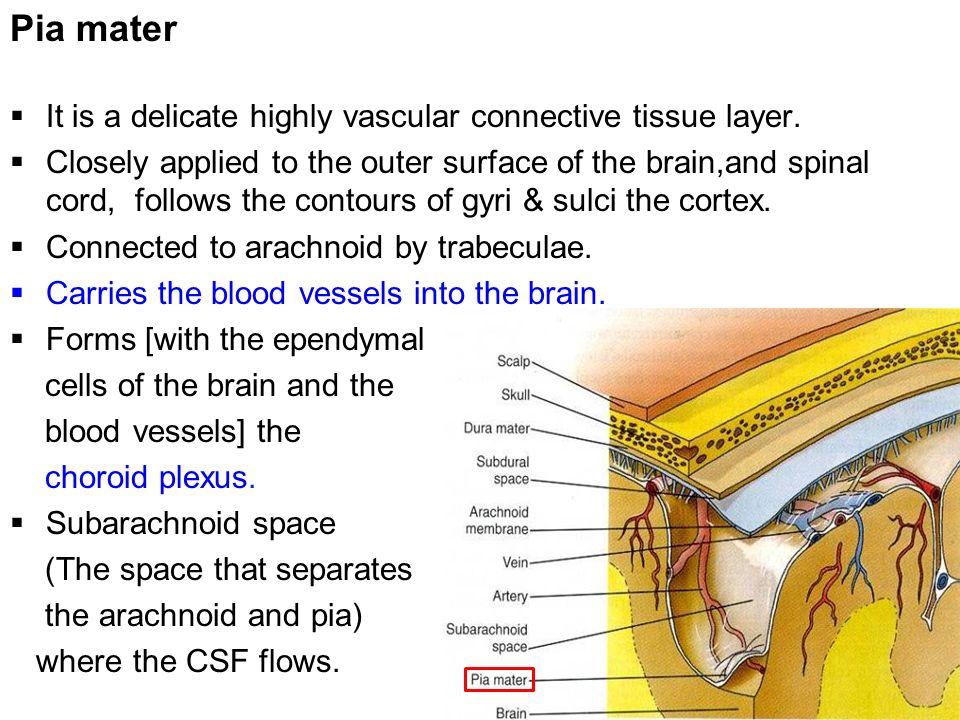 Enchanting Lumbar Puncture Anatomy Layers Mold - Anatomy Ideas ...