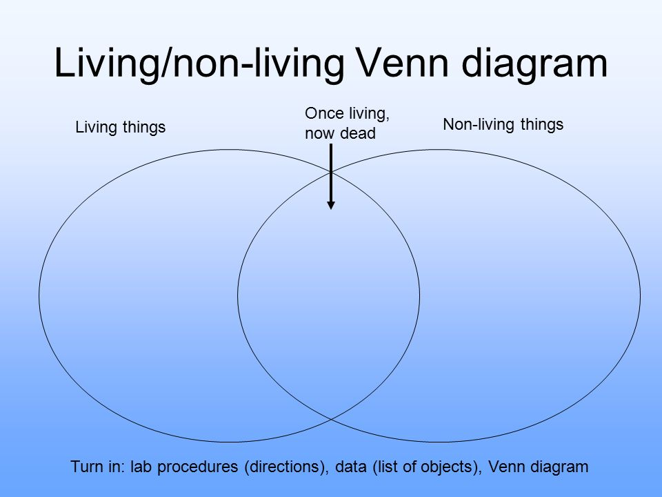 middle ages venn diagram