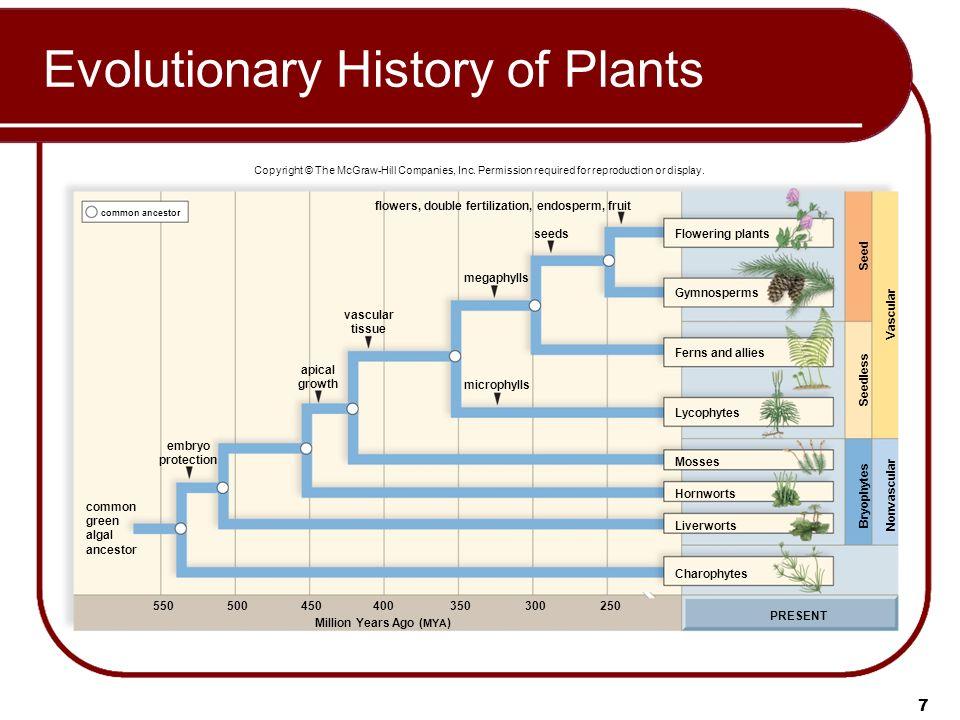 evolutionary history Transcript of evolutionary history-lion by denzil, ivan and ashwin evolutionary history-lion lion's habitat lion's current status evidence of evolutionary history.