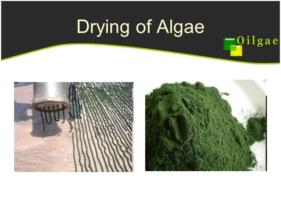 Engineering Challenges In Algae Energy Ppt Video Online