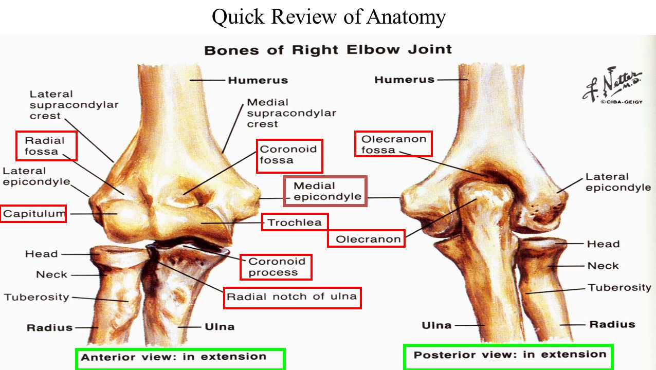 Upper Extremity Review Ppt Download