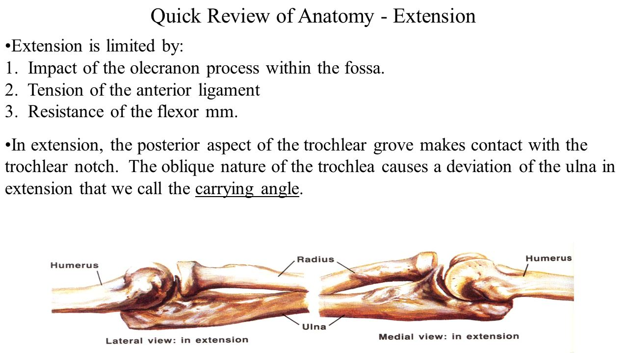 What is extension in anatomy