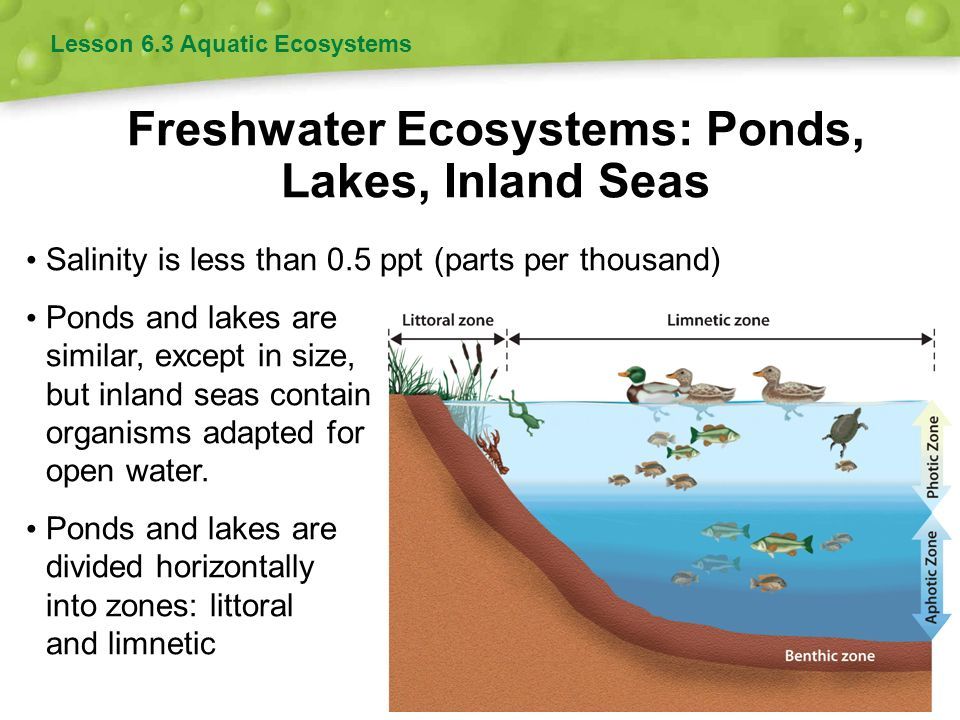 freshwater aquatic ecosystem Freshwater ecosystem | iken edu this interactive animation describes about freshwater ecosystem for more videos visit  .