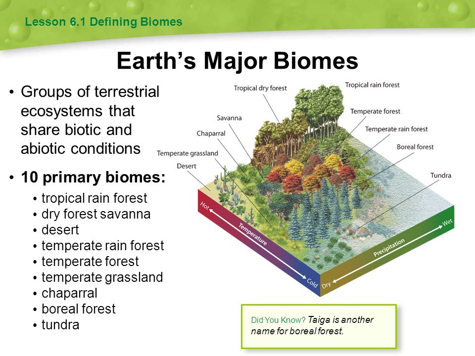 Terrestrial biomes worksheet answers