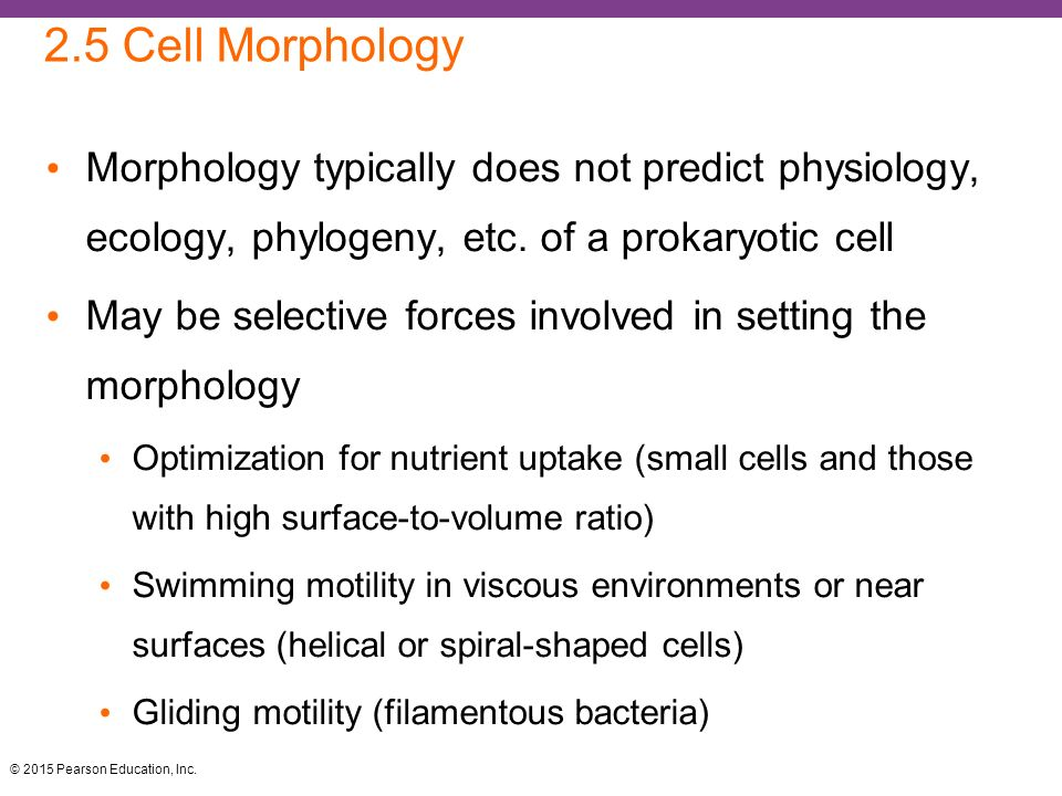 cell morphology and motility essay Effects of cell motility and morphology on the rheology of algae suspensions  motility, cell size and morphology materials and methods species and culture conditions.