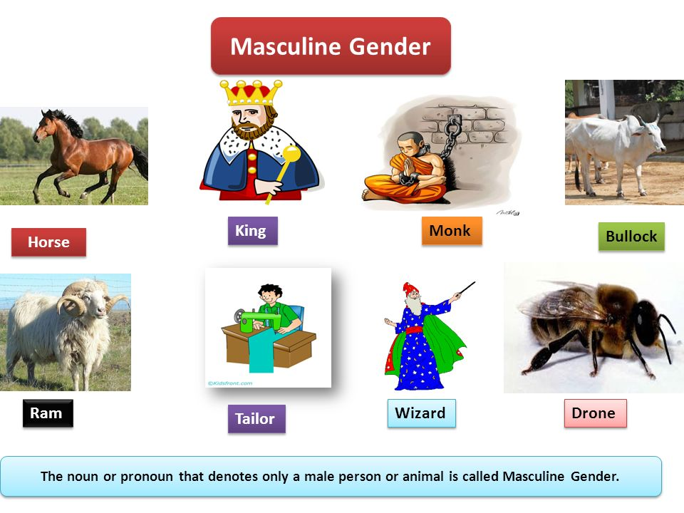 list of masculine and feminine gender words pdf