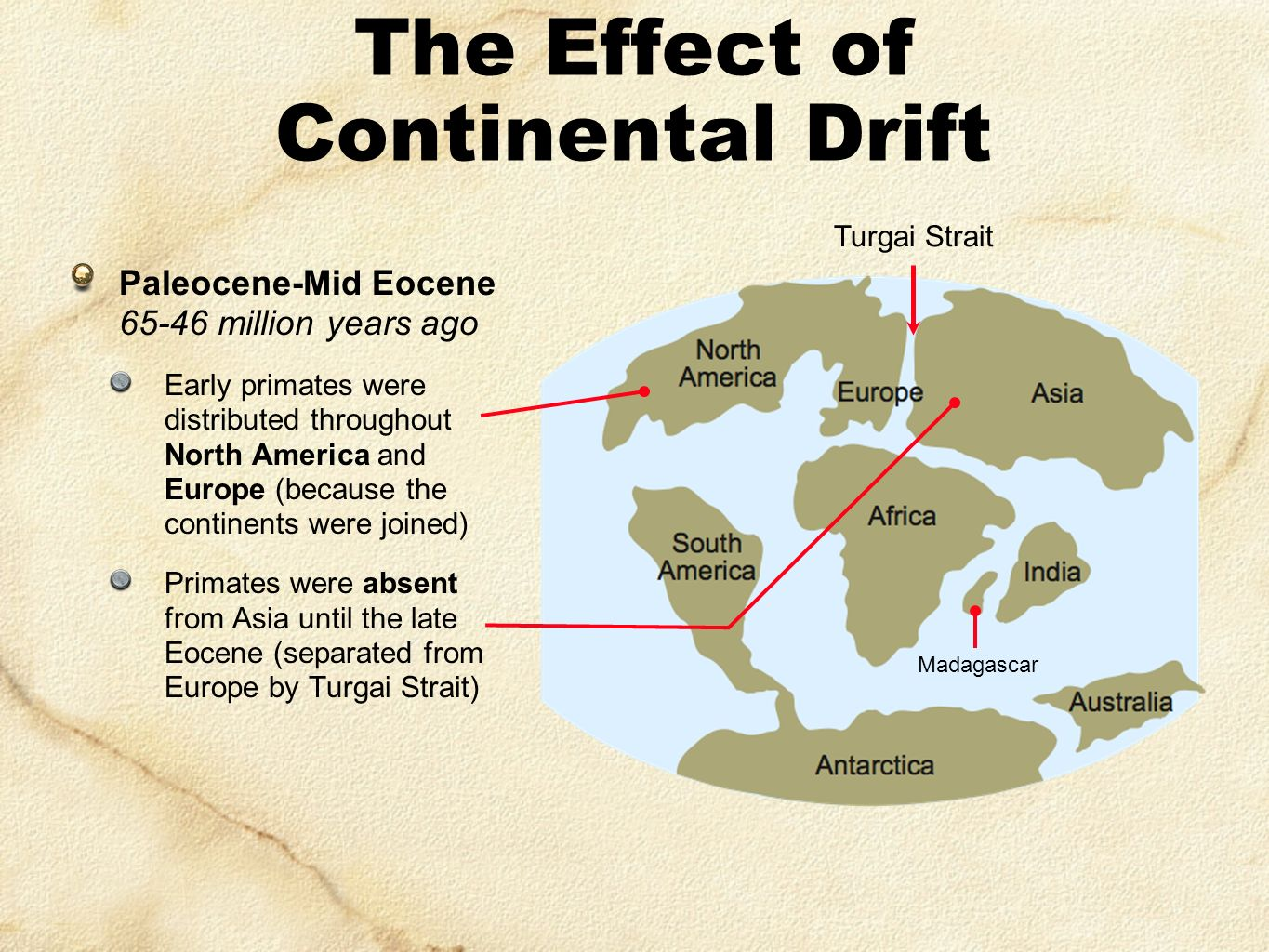 impact of continental drift on evolution Wegener and continental drift theory charles darwin was missing an important mechanism for evolution when he published the origin of species in 1859.
