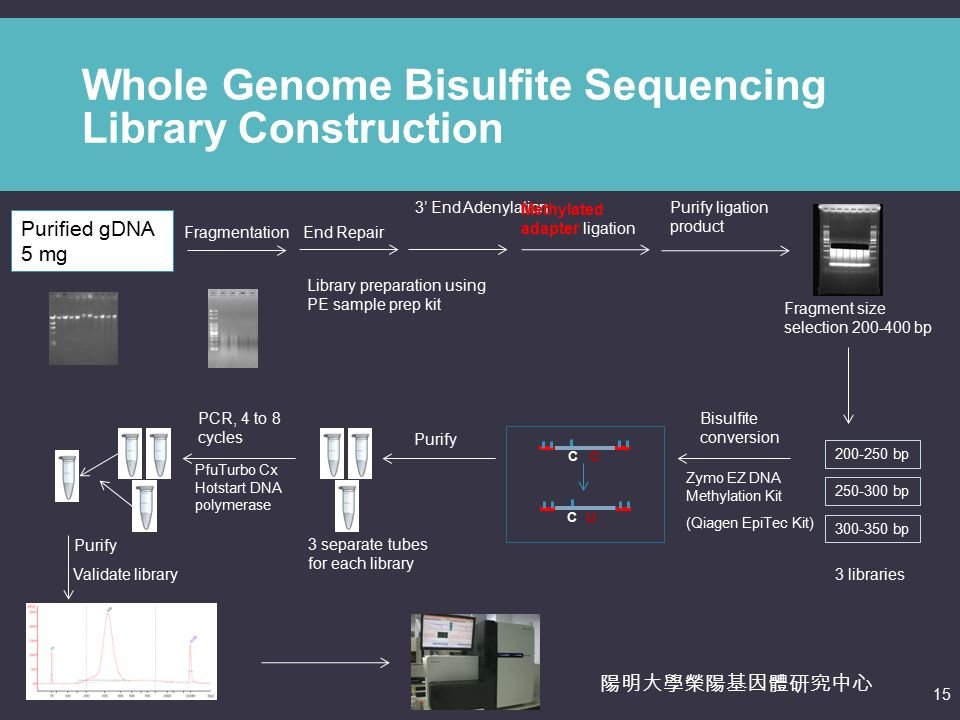 genomic library construction - photo #42