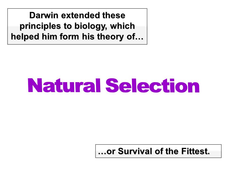 Why Is Natural Selection Called A Theory