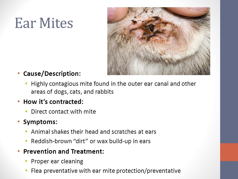 Flea And Mite Treatment For Cats
