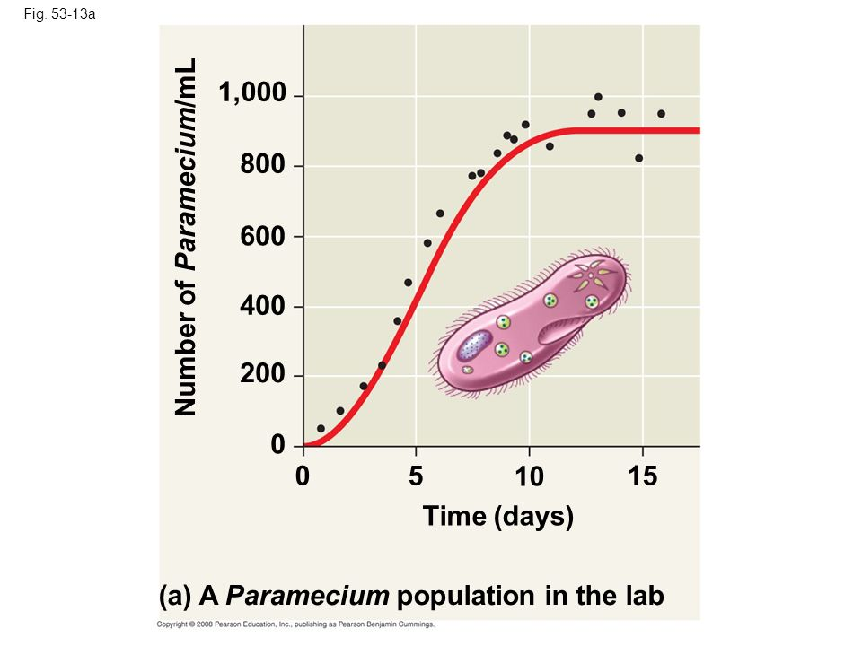 Number of Paramecium/mL