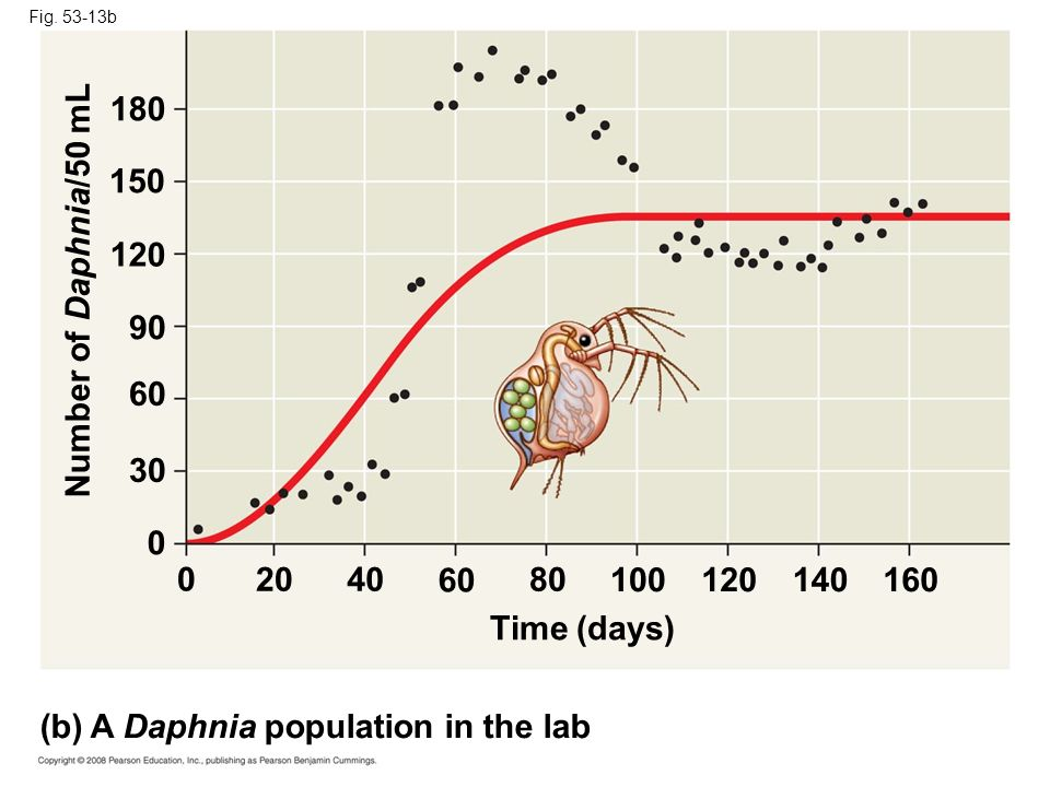 (b) A Daphnia population in the lab