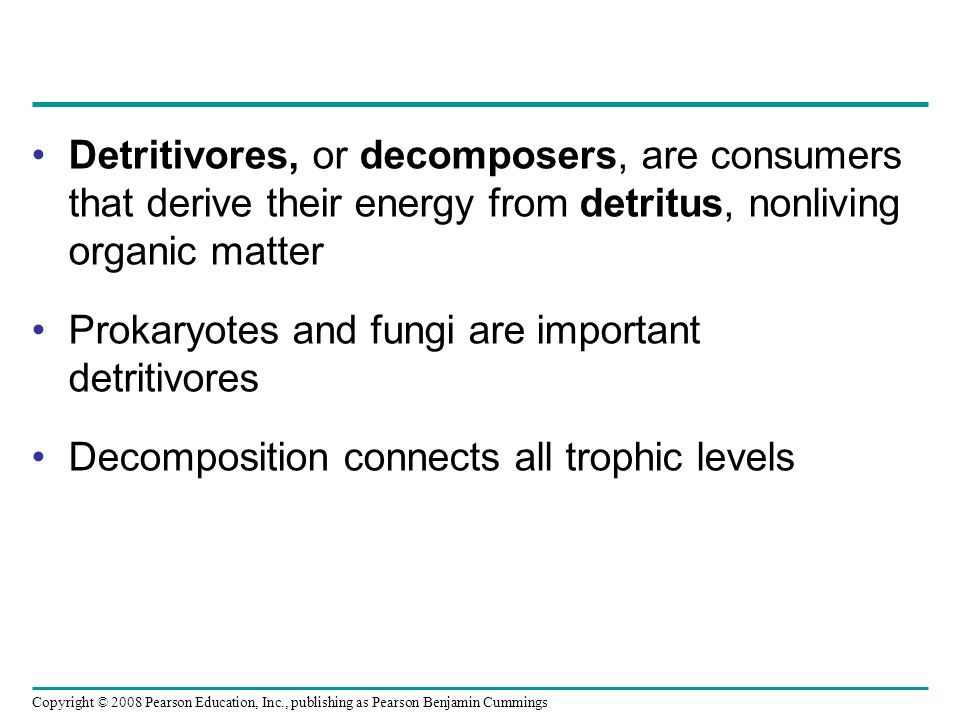Detritivores, or decomposers, are consumers that derive their energy from detritus, nonliving organic matter