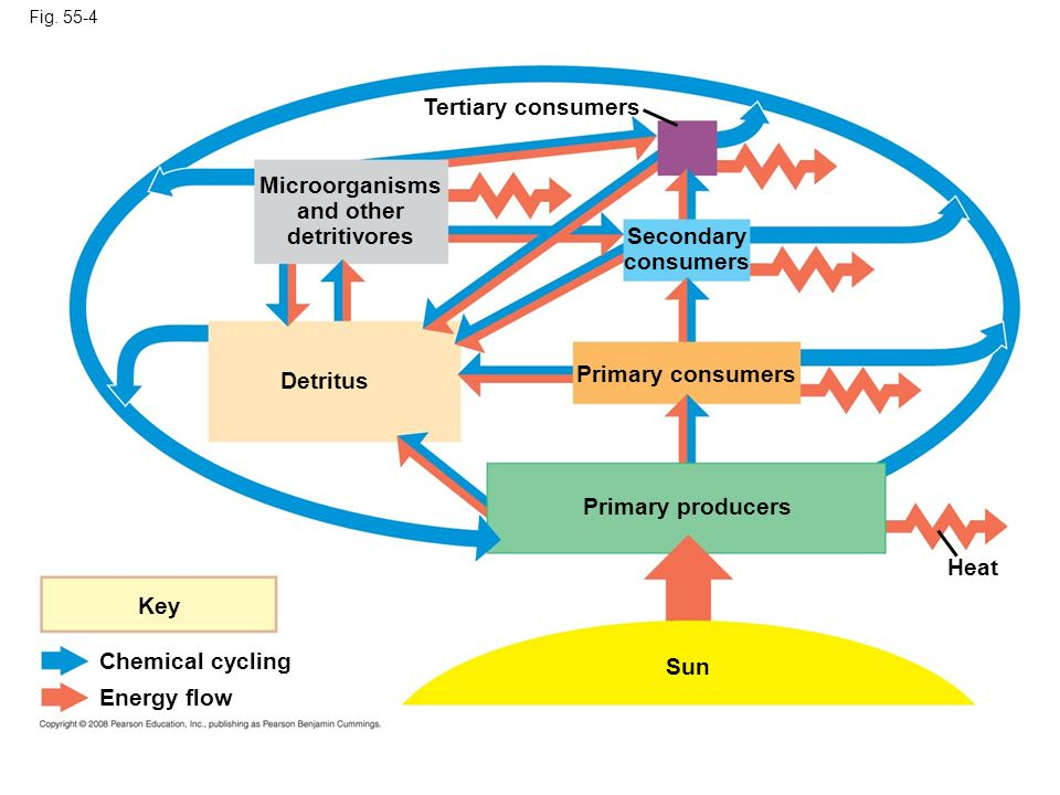Microorganisms and other detritivores Secondary consumers