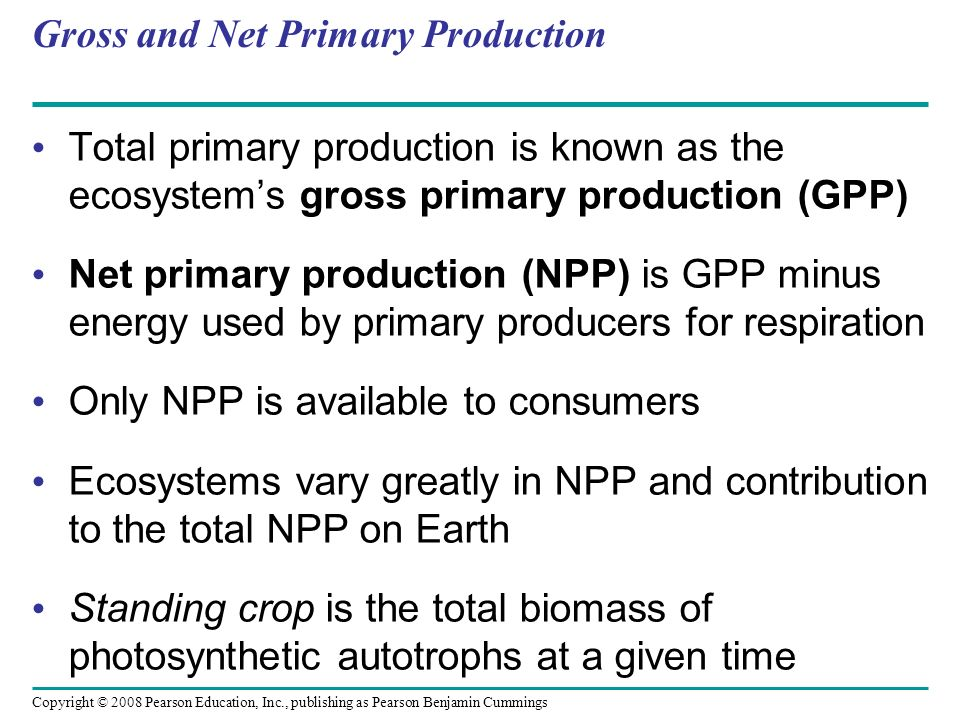 Gross and Net Primary Production