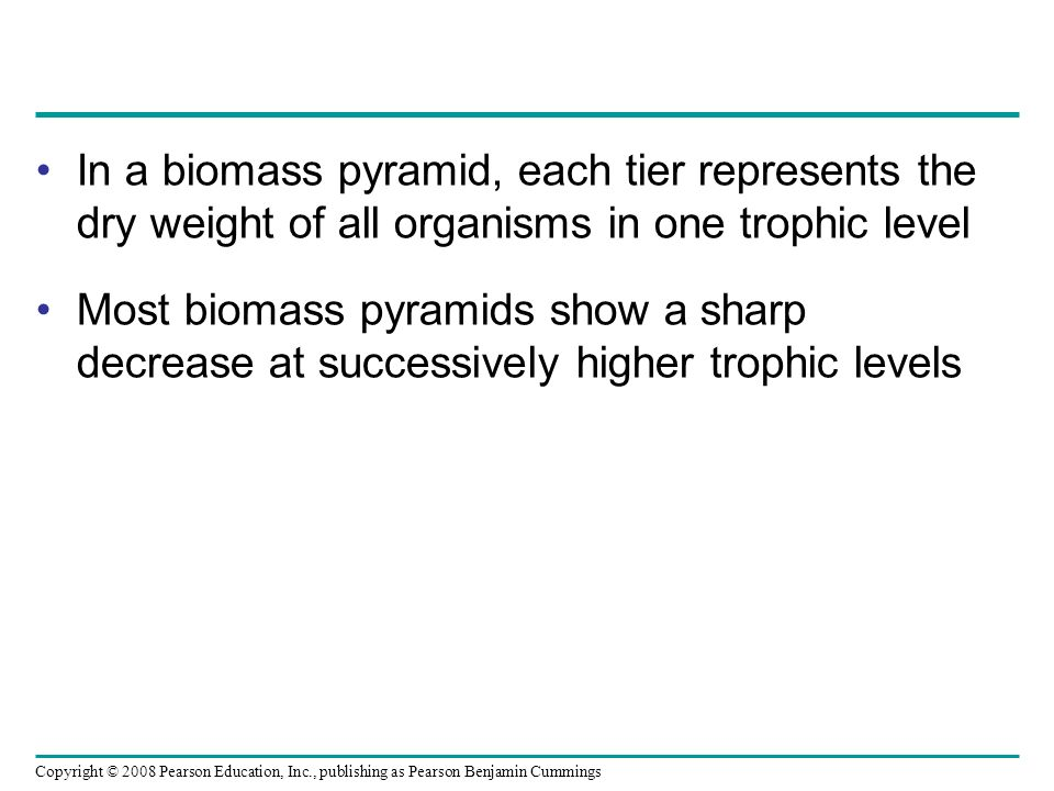 In a biomass pyramid, each tier represents the dry weight of all organisms in one trophic level