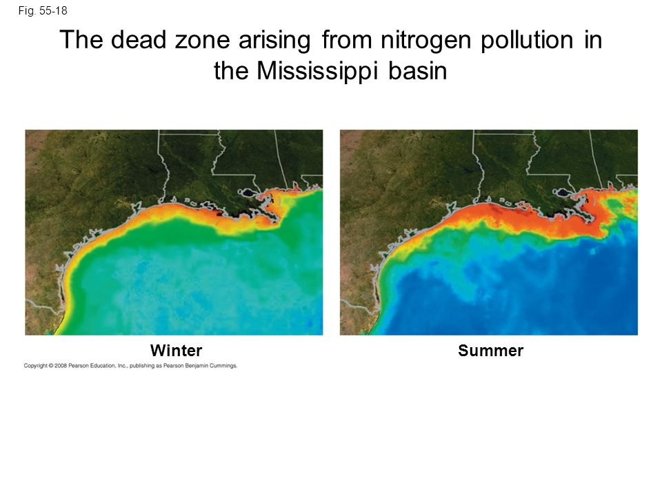 The dead zone arising from nitrogen pollution in the Mississippi basin