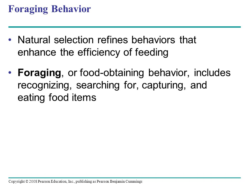 Foraging Behavior Natural selection refines behaviors that enhance the efficiency of feeding.