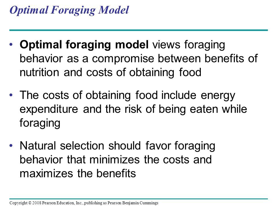 Optimal Foraging Model