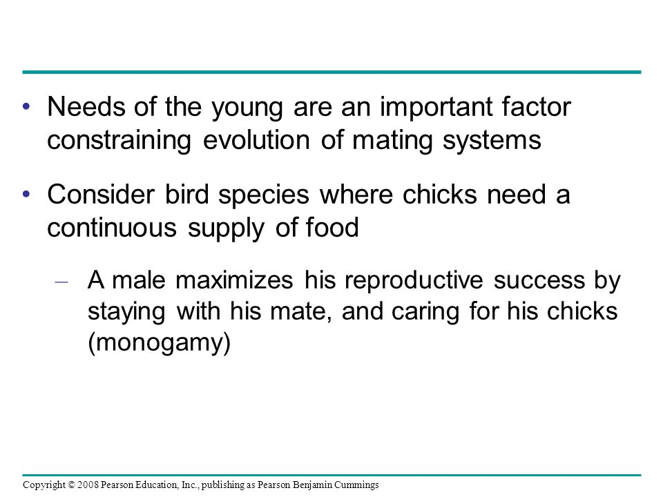Consider bird species where chicks need a continuous supply of food