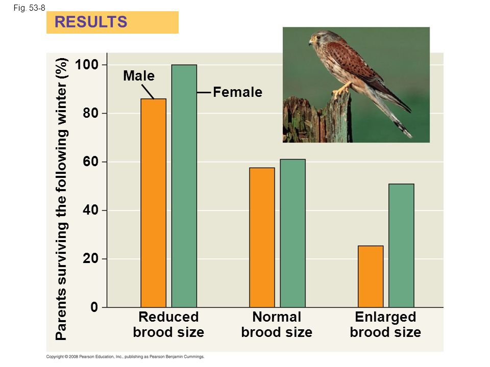 Fig. 53-8 RESULTS. 100. Male. Female. 80. 60. Parents surviving the following winter (%) 40.
