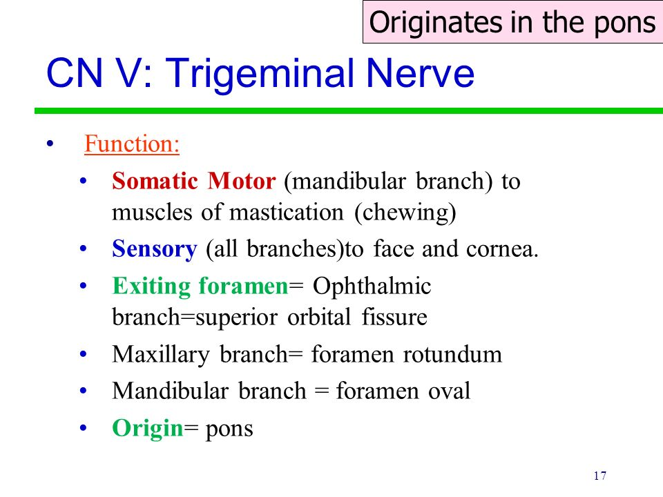 Trigeminal Nerve Function 2018 Images Pictures Department Of