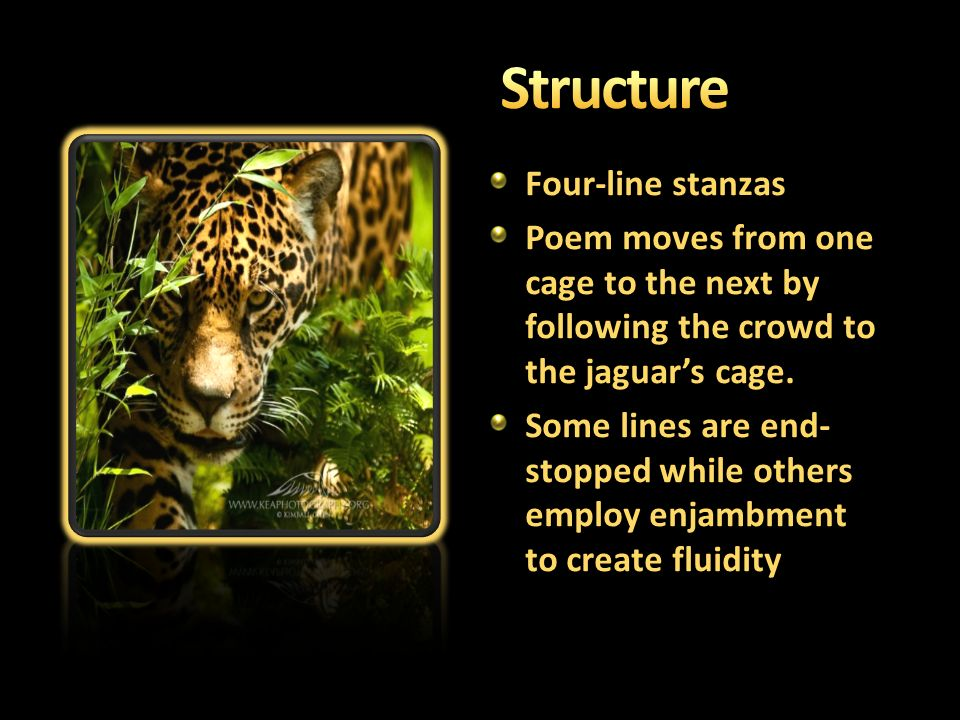 """the symbol of the power of a jaguar in ted hughes poem the jaguar Ted hughes's """"the thought-fox"""": object,  alive with a power that is rarely to be found in english poetry  """"poem"""" within it, hughes's page is being."""