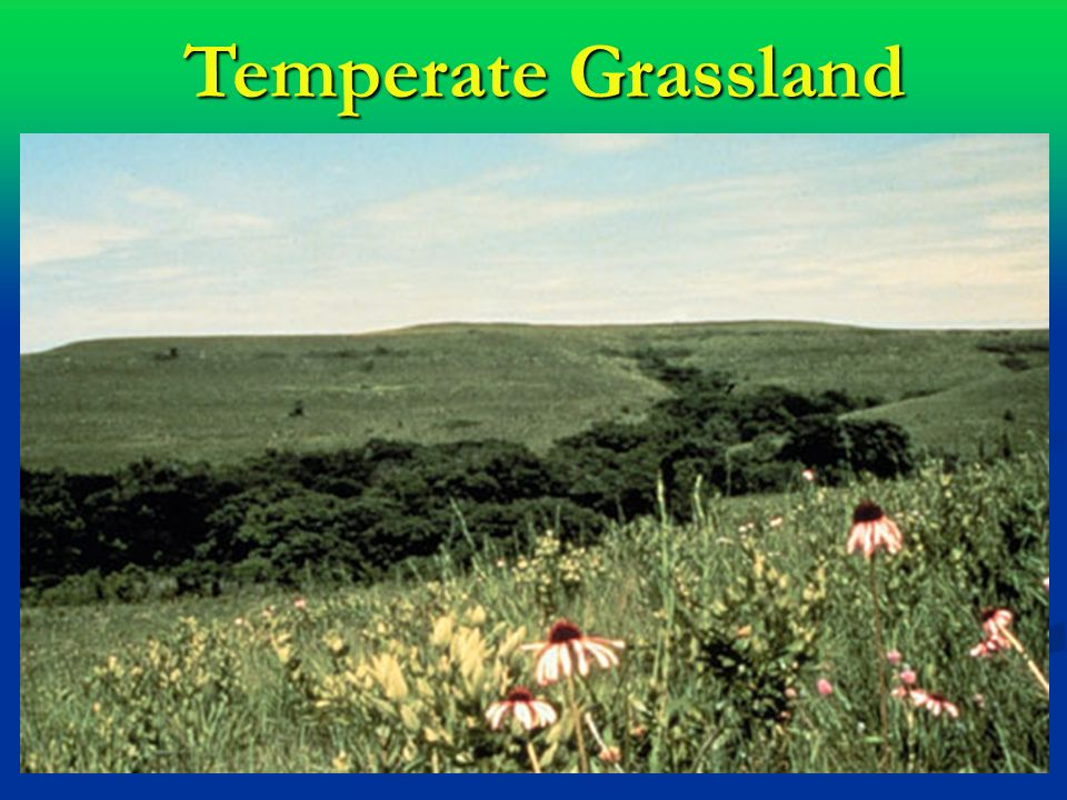 temperate grassland The grassland biome(s) grasslands, prairies, steppes, plains - all these names describe the biome where grasses rule climate: the climate for grasslands is basically dry.