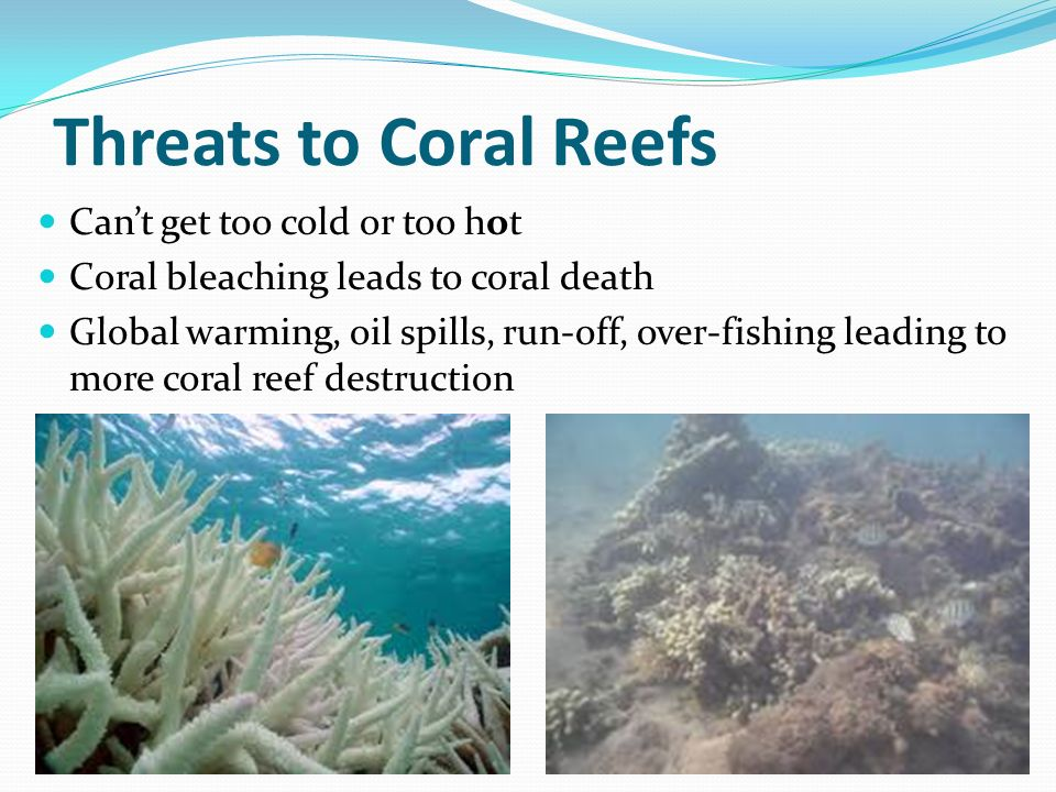 threats to coral reefs environmental sciences essay Arc centre for excellence in coral reef studies  the earth's surface, evolution  has produced ecosystems unrivalled in diversity and colour on land, some of   threats to the coastal ecosystems in the coral triangle in this.