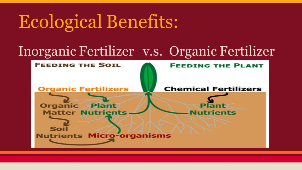 chemical fertilizer vs organic fertiliser Depending on the type of organic fertilizer used, it can be more expensive than synthetic fertilizers available bag sizes aren't large or economical enough for homeowners synthetic fertilizers are most commonly used, readily available, available in greater amounts, and generally, cost effective.