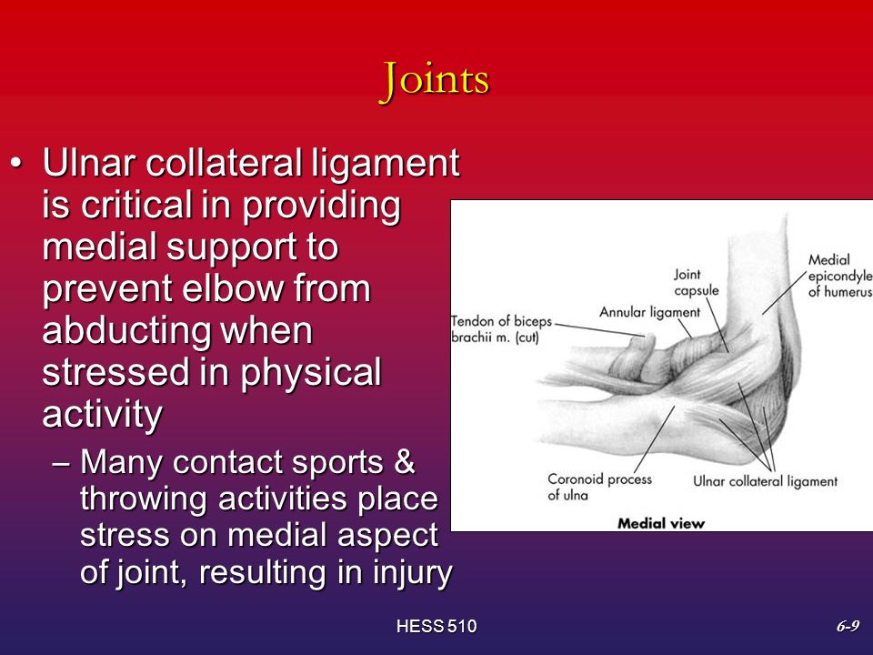 an introduction to ulnar collateral ligament injury to the elbow Quantitative analysis of the medial ulnar collateral ligament ulnar footprint  introduction: injuries to the medial ulnar  classically, this injury is seen.
