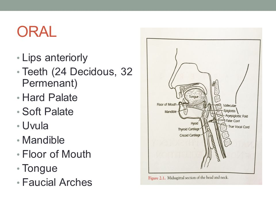 Anatomy and Physiology of Normal Deglutition - ppt video online download