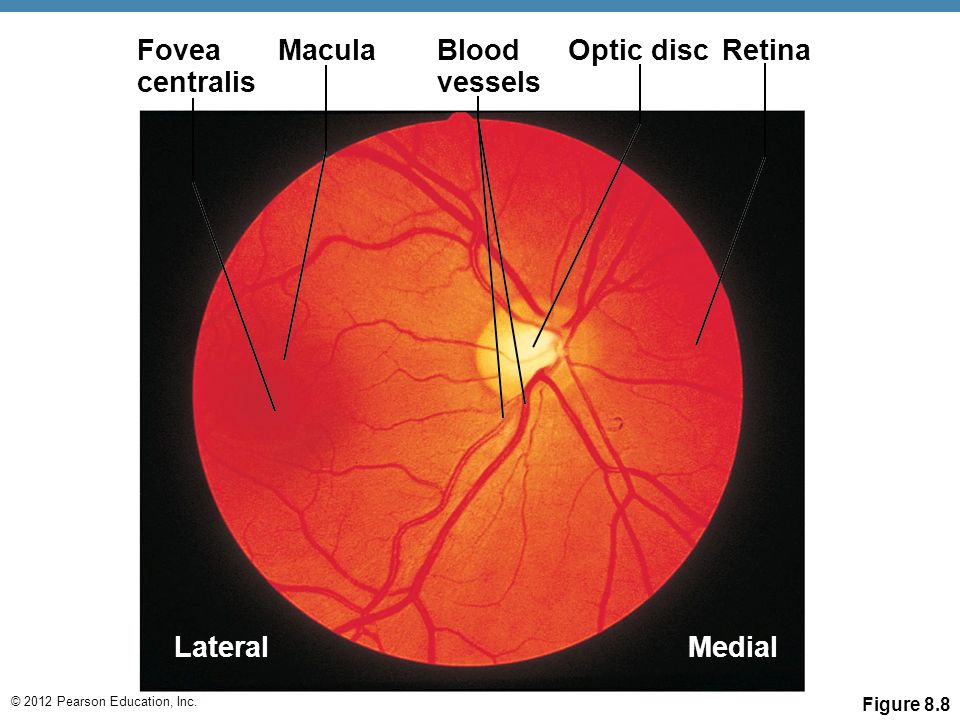 a experiment report on seeing the vessels of the retina without using ophthalmoscope Retinal vessel occlusion called an ophthalmoscope to see whether your retina's blood and over growth of small blood vessels in the retina called.