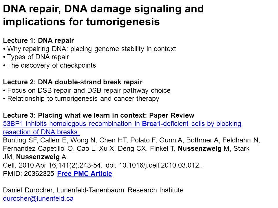 DNA repair, DNA damage signaling and implications for tumorigenesis