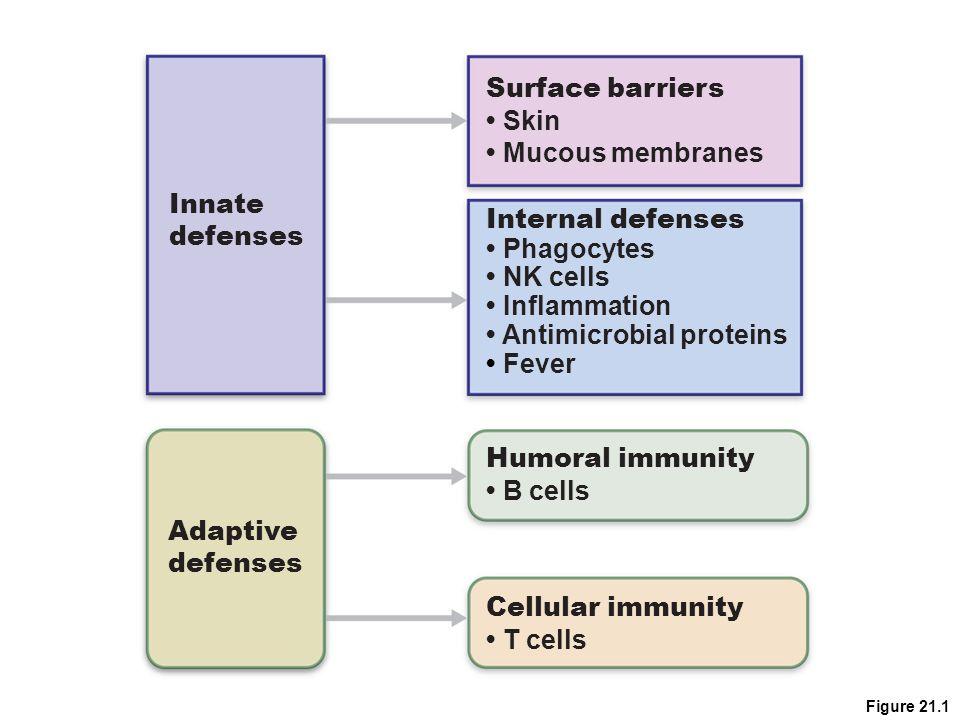 innate and adaptive immune system pdf