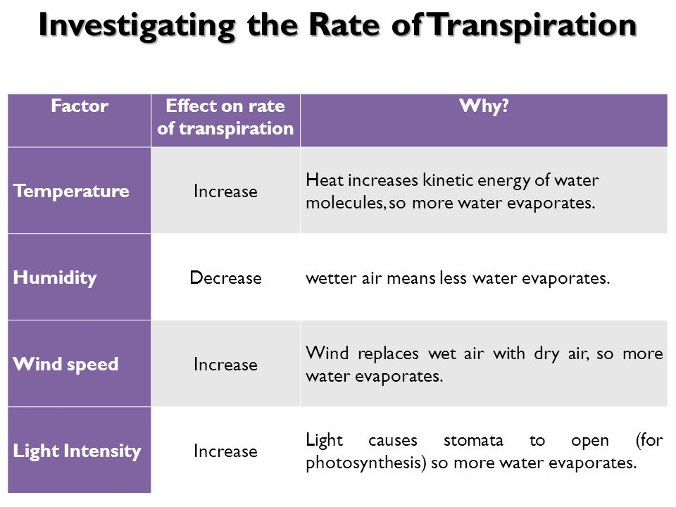 photosynthesis and transpiration increases When the relative humidity in a plant's environment rises, its rate of transpiration lowers, and a decrease in humidity causes the transpiration rate to rise air that is humid does not accept water vapor easily, and drier air makes it easier for a plant to release water by evaporation through the .